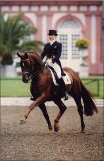 dressage horse in extended trot